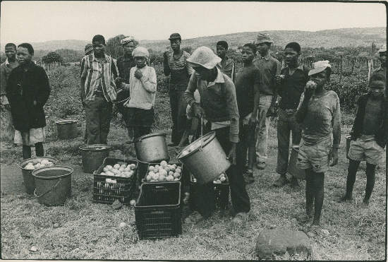 Farm  labourers, South Africa, photographer unknown, AL2547_11.1.4, SAHA Original Photograph  Collection