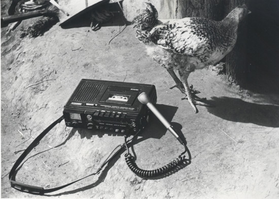Tape recorder with chicken, 1980. Photograph by Biddy Partridge. Archived as SAHA collection AL2460_U06.03